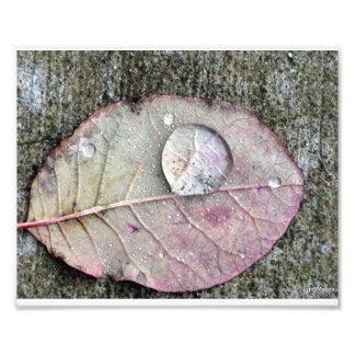葉の水滴 フォトプリント