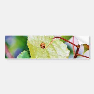 葉の着席のてんとう虫 バンパーステッカー