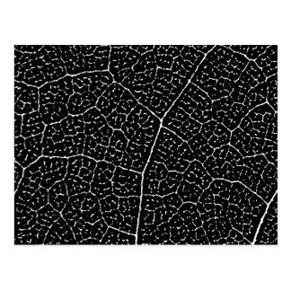 葉の静脈の構造 ポストカード