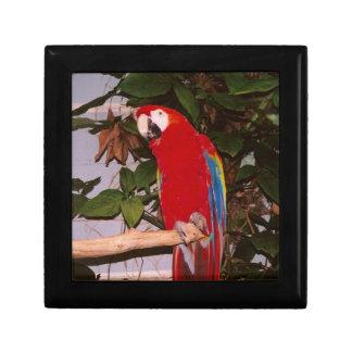 葉を持つ赤いコンゴウインコ ギフトボックス