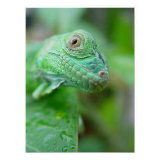 葉ポスターの緑のイグアナのトカゲのハ虫類 ポスター