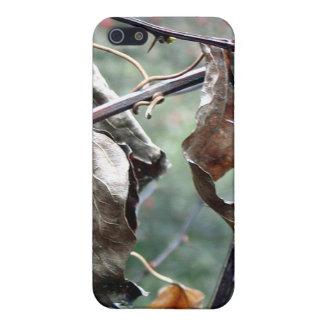葉iPhone4の箱を乾燥して下さい iPhone SE/5/5sケース