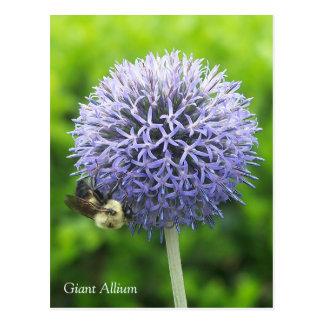 葱類の花および蜂蜜の蜂の郵便はがき ポストカード