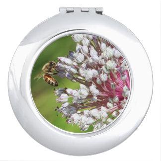 葱類の蜂蜜の蜂によっては密集した鏡が開花します