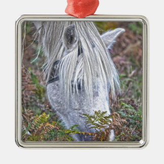 蕨で牧草を食べている野生の白く新しい森林子馬 メタルオーナメント
