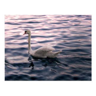 薄暗がりの白鳥 ポストカード