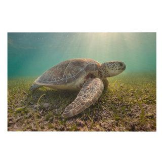 薄暗がり  Akumal湾の緑のウミガメ ウッドウォールアート