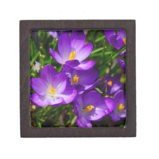 薄紫のクロッカス ギフトボックス
