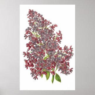薄紫の優れた植物のプリント ポスター