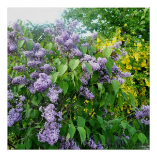 薄紫の花の塀ゴトランドスウェーデン プリント