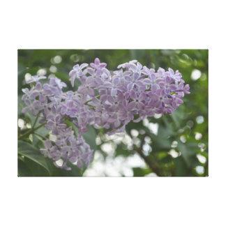 薄紫の花の紫色のlavanderのラベンダーのキャンバス キャンバスプリント