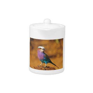 薄紫のBreastedの鳥