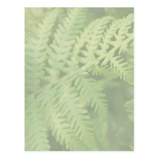 薄緑のシダの葉。 ポストカード