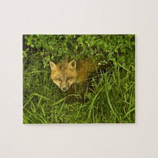 薮に隠れることから来ている若いアカギツネ ジグソーパズル