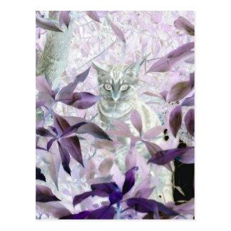 薮のかわいい子ネコ、紫色の抽象美術 ポストカード