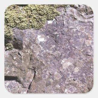 薮の設定のオーストラリアの花こう岩で育っているコケ スクエアシール