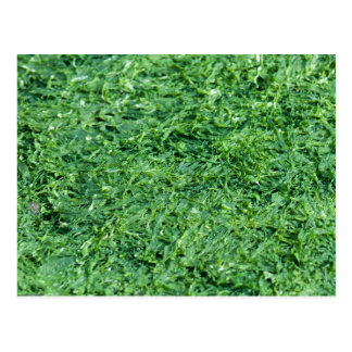 藻の緑の背景 ポストカード