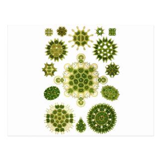 藻 ポストカード