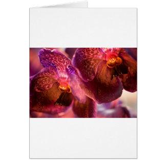 蘭のバンダの純粋なワックスの花 グリーティングカード
