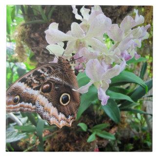 蘭のフクロウの蝶 タイル