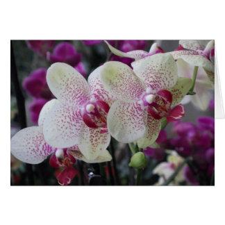 蘭の花カード カード