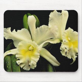 蘭のcattleya (Deesseチャールズ)の花 マウスパッド