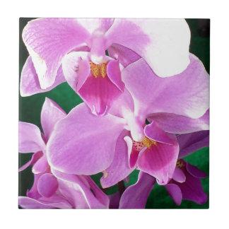 蘭はクローズアップピンクの咲きます タイル