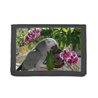 蘭を持つアフリカ灰色のオウム