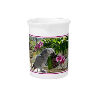蘭を持つアフリカ灰色のオウム ピッチャー