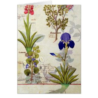 蘭及びFumitoryまたは大げさに同情する人のヘデラ及びアイリス カード