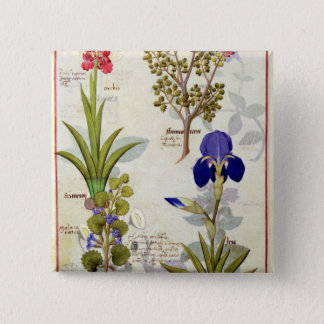 蘭及びFumitoryまたは大げさに同情する人のヘデラ及びアイリス 5.1cm 正方形バッジ