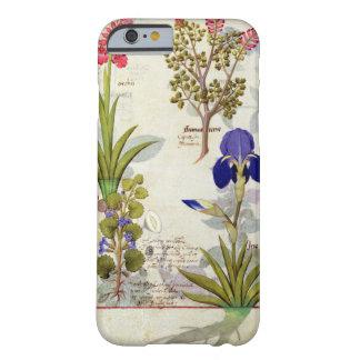 蘭及びFumitoryまたは大げさに同情する人のヘデラ及びアイリス Barely There iPhone 6 ケース