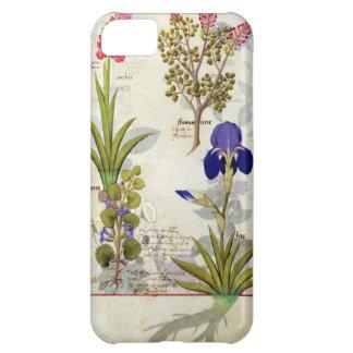 蘭及びFumitoryまたは大げさに同情する人のヘデラ及びアイリス iPhone 5C ケース