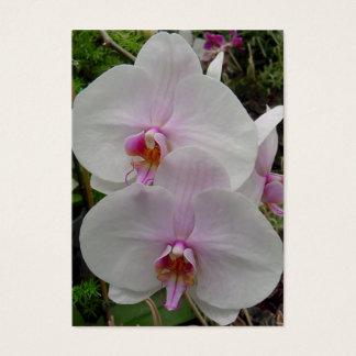 蘭-ピンクの花(Colossians 2: 3) 名刺
