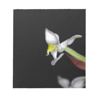 蘭Ludisiaの花は変色します ノートパッド