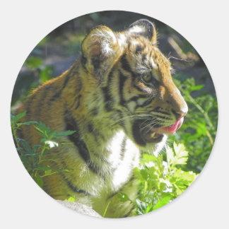 虎の子のポートレートの舌 ラウンドシール