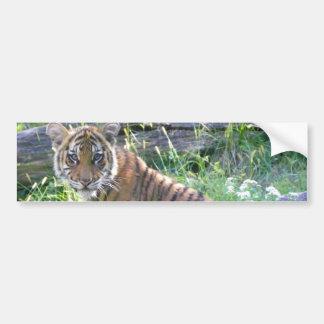 虎の子のポートレート2 バンパーステッカー
