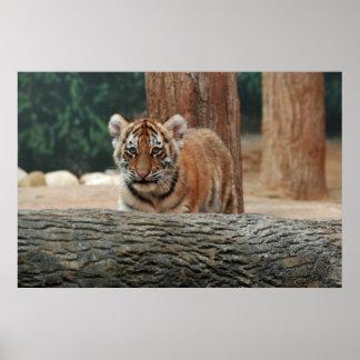 虎の子ポスター ポスター
