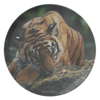 虎の子石で眠ります プレート