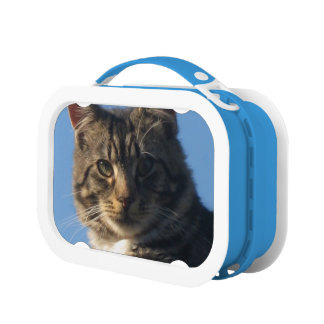 虎猫の子ネコ-青いYuboのお弁当箱 ランチボックス
