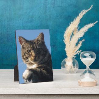 虎猫猫のイメージ-写真のプラク及びイーゼル フォトプラーク