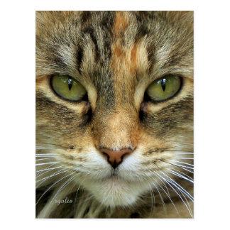 虎猫猫のポートレートの郵便はがき ポストカード