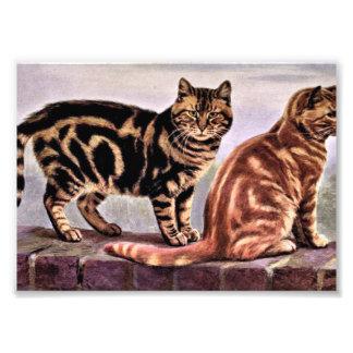 虎猫猫のヴィンテージの引くこと フォトプリント