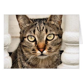 虎猫猫 カード
