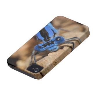 虫 Case-Mate iPhone 4 ケース