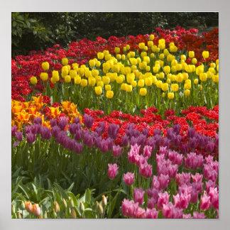 虹のすべての色 ポスター