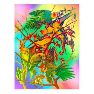 虹のオウムパレード ポストカード