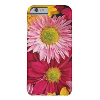 虹のガーベラのデイジーのiPhoneの場合 Barely There iPhone 6 ケース