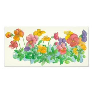 虹のパンジーの水彩画によっては絵画が開花します フォトプリント