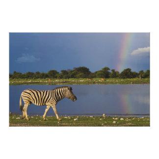 虹の前の平野のシマウマの歩く キャンバスプリント